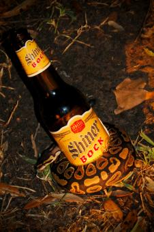 Free Stock Photo of Bottle snake