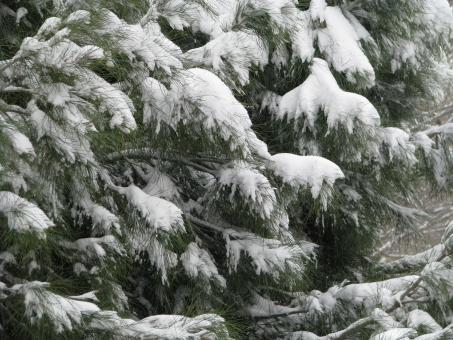Free Stock Photo of Snow Covered Tree
