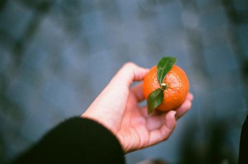Free Stock Photo of The tangerine