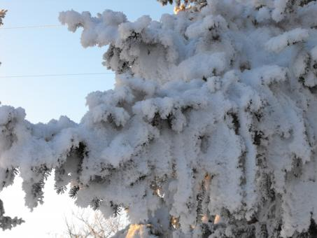 Free Stock Photo of Frosted Tree