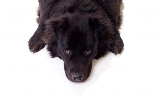 Free Stock Photo of Black dog