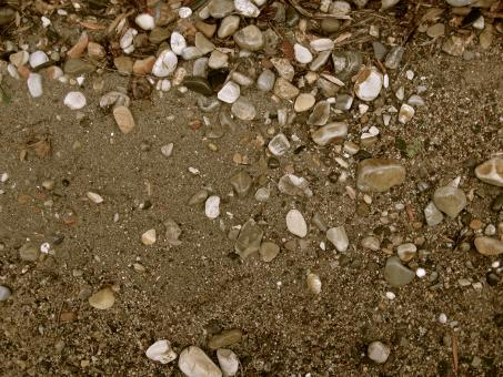 Free Stock Photo of Shell Beach Texture