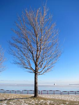Free Stock Photo of Bare Trees