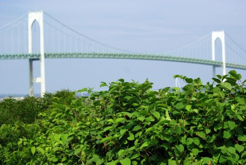 Free Stock Photo of Pell Bridge