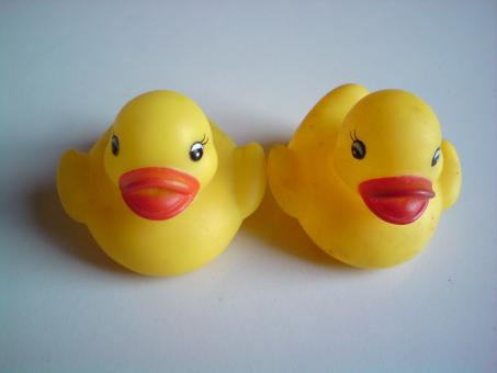 Free Stock Photo of Rubber Ducks
