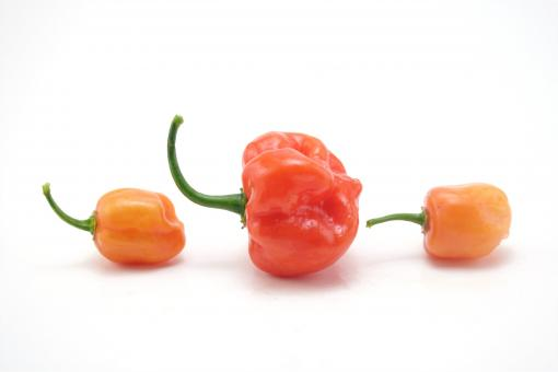 Free Stock Photo of Hot habaneros