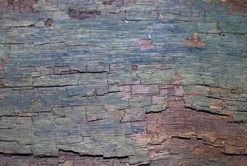 Free Stock Photo of Bark Texture