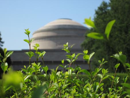 Free Stock Photo of MIT building thru hedge
