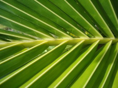 Free Stock Photo of Palm Texture
