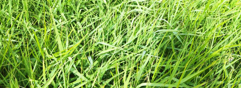 Free Stock Photo of spring green grass