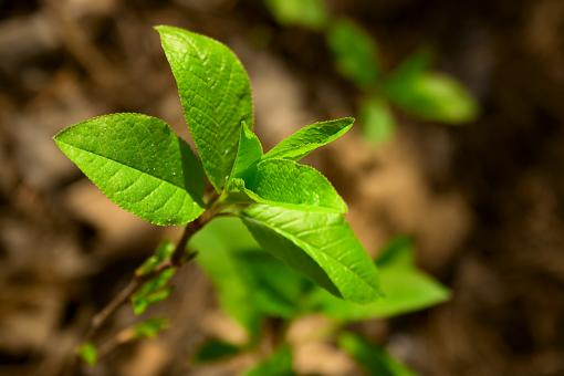Free Stock Photo of Green Plant