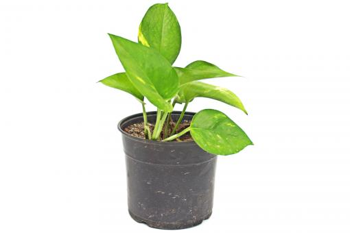 Free Stock Photo of Plant in pot