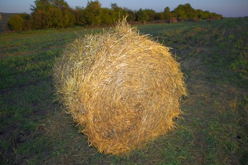 Free Stock Photo of hay