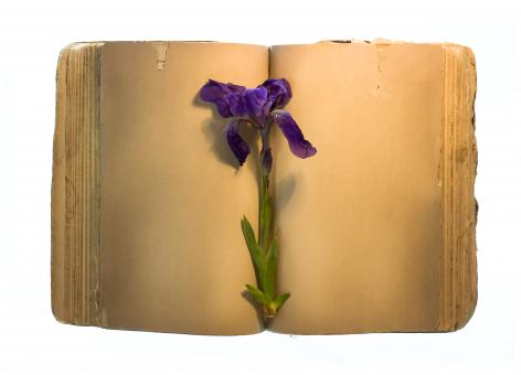 Free Stock Photo of Old book & flower