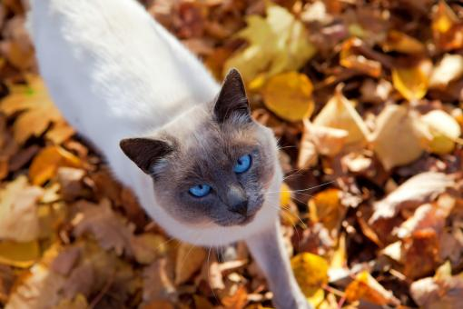 Free Stock Photo of autumn cat