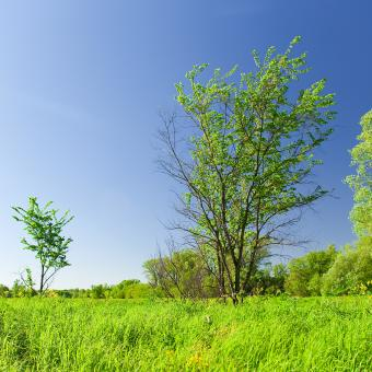 Free Stock Photo of blue and green scene