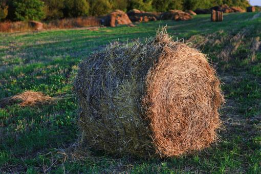 Free Stock Photo of haystack
