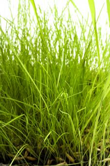 Free Stock Photo of Grass