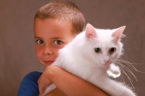 Free Stock Photo of Boy holding a cat
