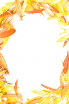 Free Stock Photo of Frame from Flower Petals