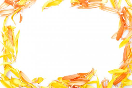 Free Stock Photo of Flower Petals Frame