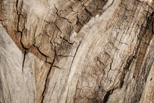 Free Stock Photo of Grungy Cracked Wood