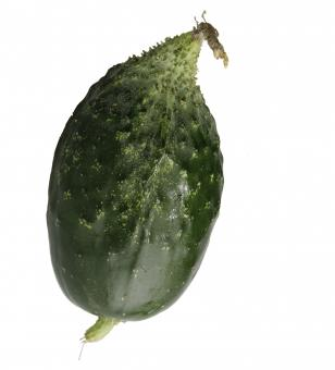 Free Stock Photo of Cucumber