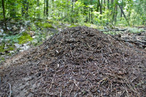 Free Stock Photo of Anthill