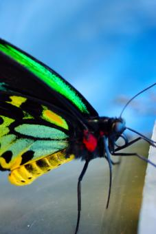Free Stock Photo of Butterfly Closeup