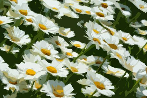 Free Stock Photo of Illustrated Daisies