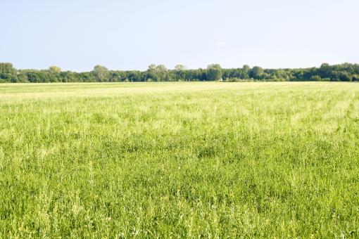 Free Stock Photo of Field