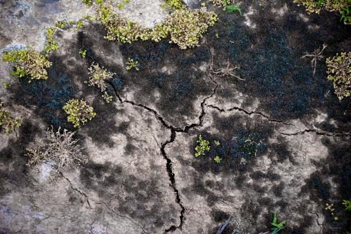 Free Stock Photo of Cracked Soil Surface