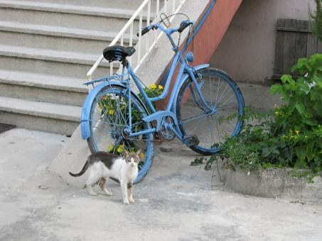 Free Stock Photo of Cat and bicycle
