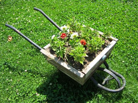 Free Stock Photo of wheelbarrow