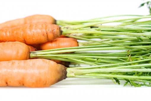 Free Stock Photo of carrot