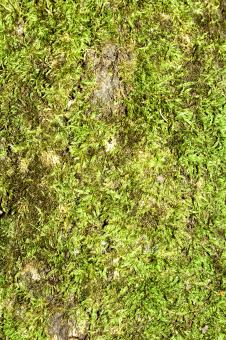 Free Stock Photo of Moss