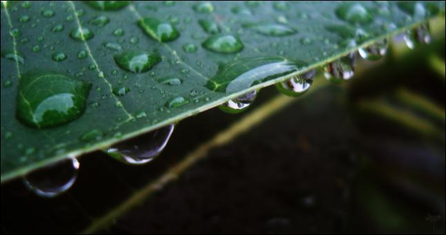 Free Stock Photo of Droplets on leaf