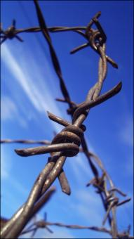 Free Stock Photo of Barbwire