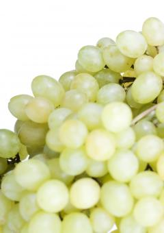 Free Stock Photo of grape
