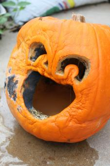 Free Stock Photo of Rotten pumpkin
