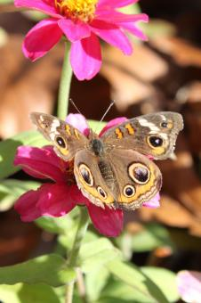 Free Stock Photo of Flower with butterfly