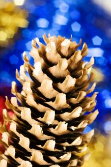 Free Stock Photo of christmas pine cone