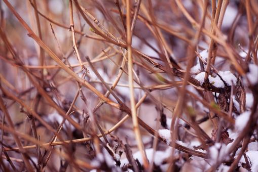 Free Stock Photo of branches