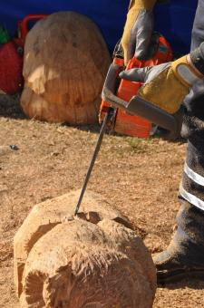 Free Stock Photo of Craftsman is working with chainsaw
