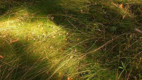 Free Stock Photo of Grass 1