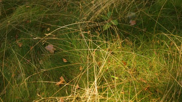 Free Stock Photo of Grass 2