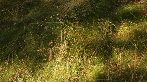 Free Stock Photo of Grass 4