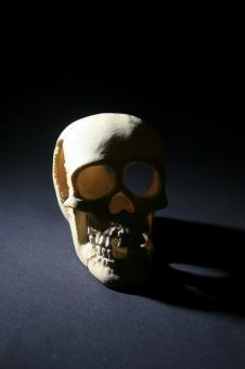 Free Stock Photo of skull