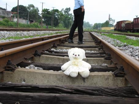 Free Stock Photo of Bear on the railroad