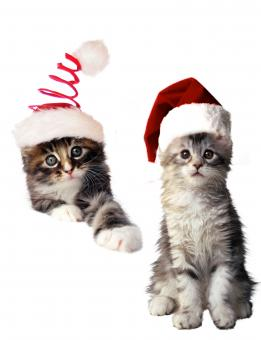 Free Stock Photo of Christmas Cats